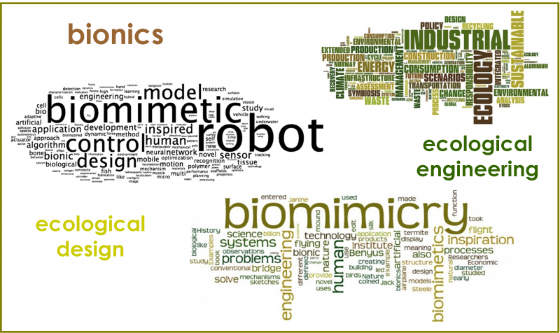 Figure 1: A word cloud impression of the field of bio-inspired innovation